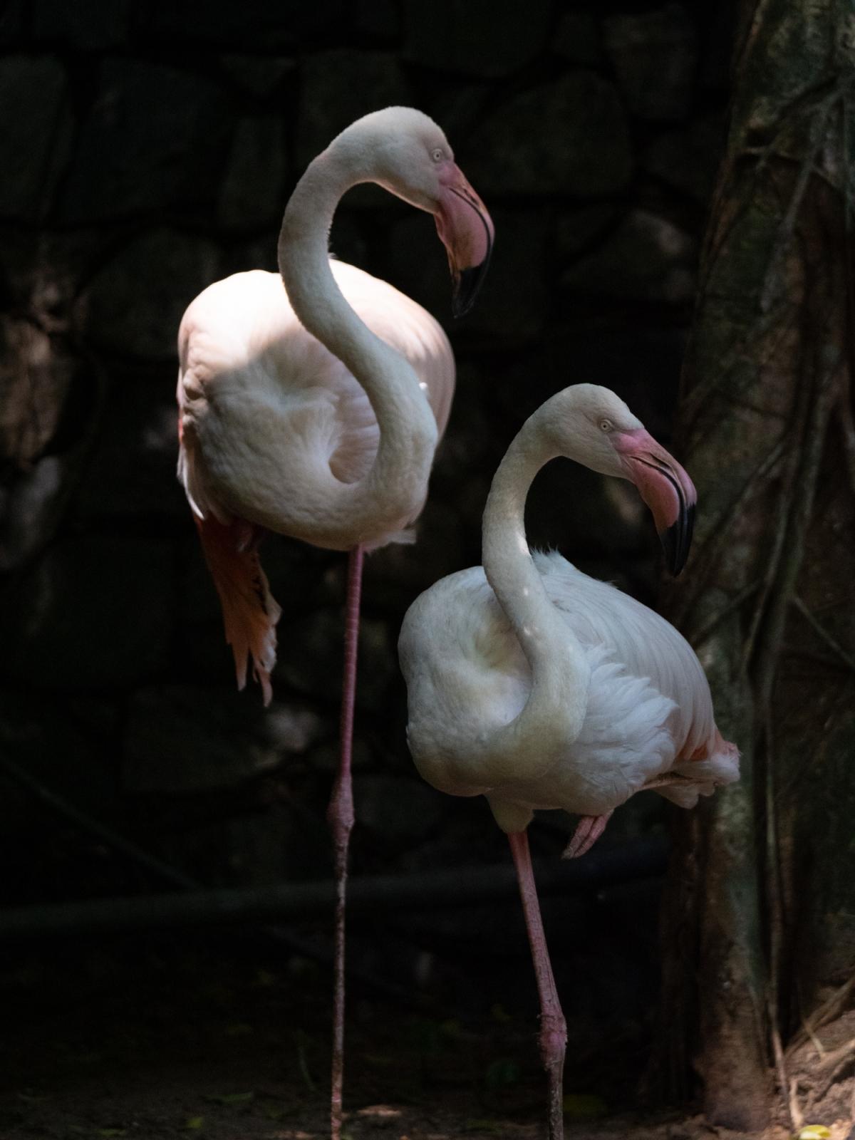 Flamingo pause